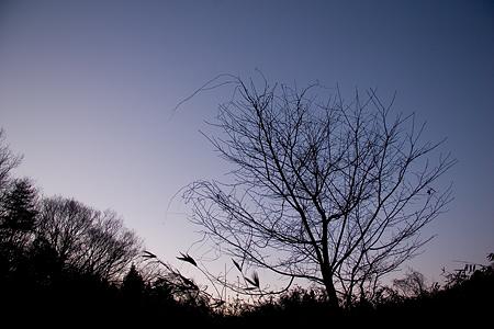 冬の海上の森後-9