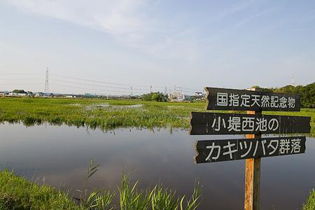 小堤西池風景-1