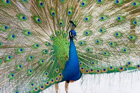 ふれあいの鳥たち-2