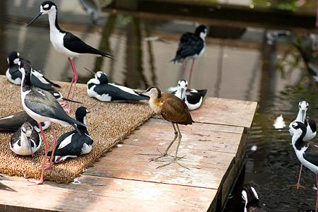 ふれあいの鳥たち-6