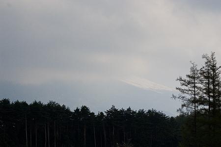 富士桜-9