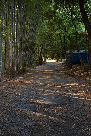 奥へと続く竹林