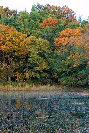 猪高緑地の静まりかえった池