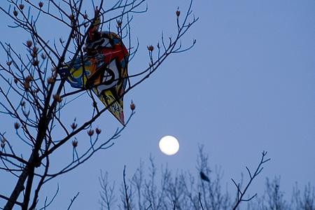 木に引っかかった凧