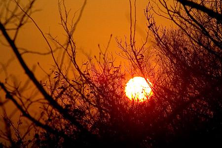 木の中に沈む夕陽