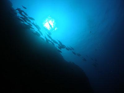 粟国遠征ダイビング