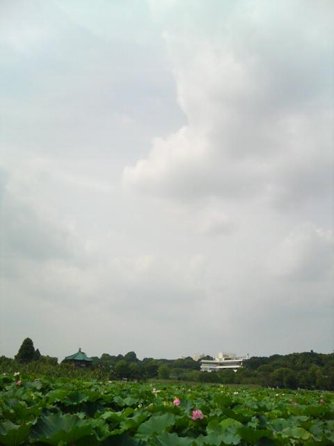 DSC00596.jpg