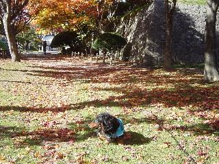 落ち葉の中で~カサカサと