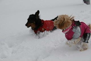 かのんハッピー雪の中①