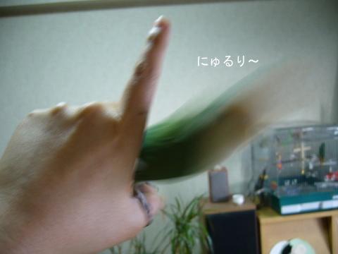 忍法にゅるりの術2