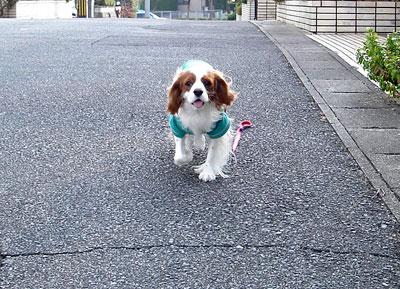 散歩に行くと