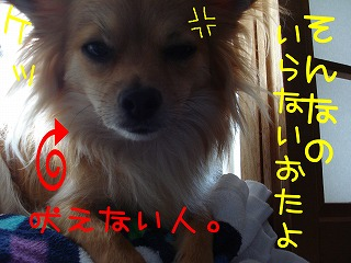 DSC05081.jpg