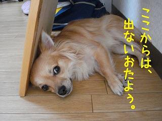 DSC05639.jpg