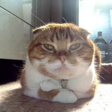 考える猫 )