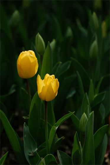 どの花みてもキレイだな♪