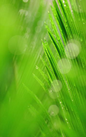 緑としずく