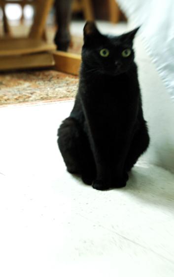 自分のおうちの横にいる猫ヤン