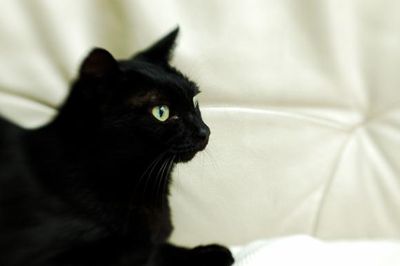 ソファの上の猫ヤン