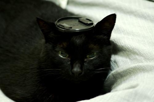 猫のヤン2
