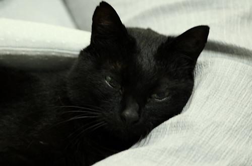 猫のヤン3