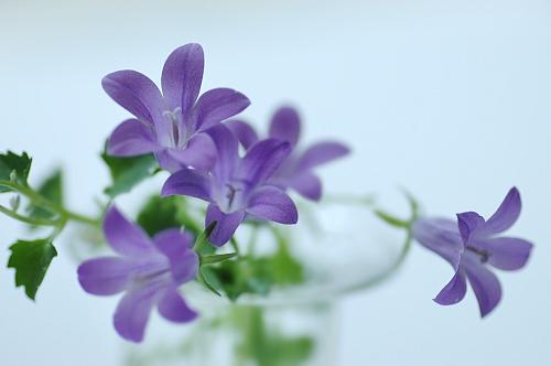 bell-flower.jpg