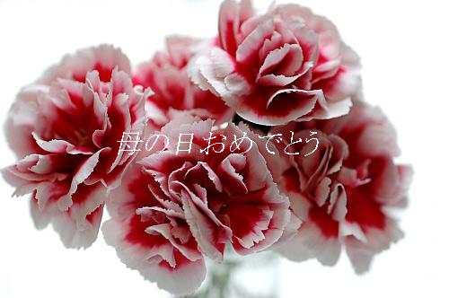 hahanohi-1.jpg