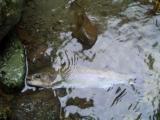 釣り日記3