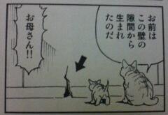 0807ぷーねこ