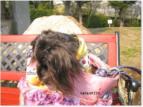 20080307hana1.jpg