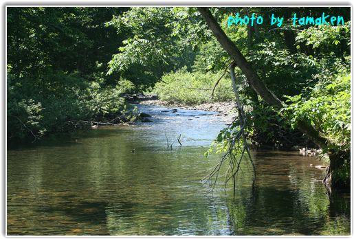 きれいな川でした