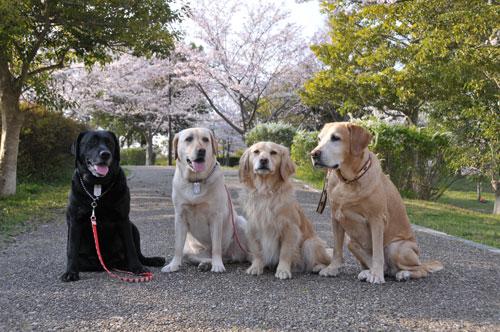桜の下で整列