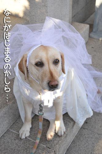 花嫁できあがり~♪