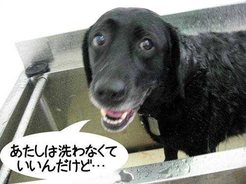 いやいやっ、濡れるのいやっ!