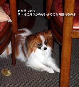2008-02-17 19;00_DSC09738 -300