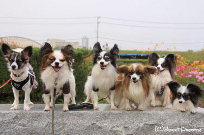 6パピ大集合!!