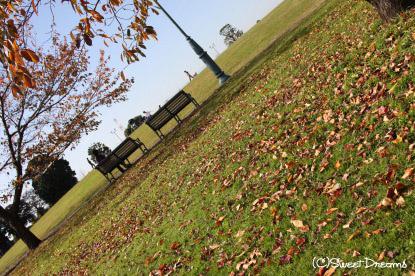 秋の公園です♪