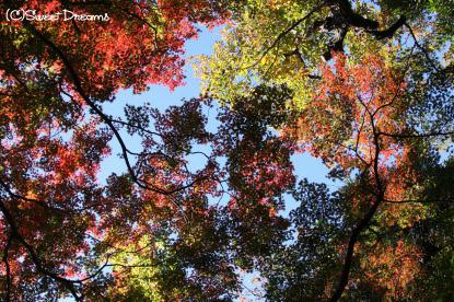 紅葉の季節になりました☆