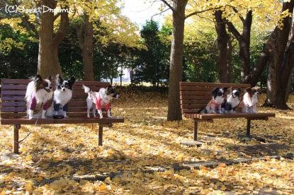 6パピオフ@根岸森林公園