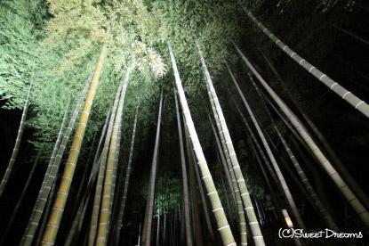 竹林も幻想的