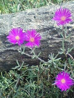 ぴんくの小さな花