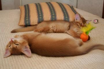 遊び疲れて眠る二匹