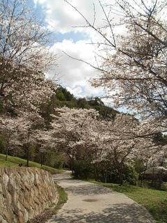 木戸公園5
