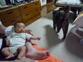 ネコ様と一緒