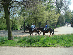 horses in Hyde park