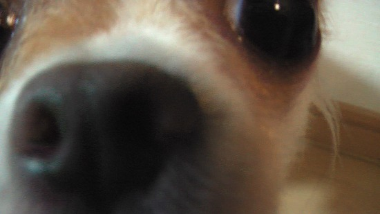 20080822Image043.jpg