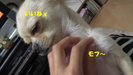 20080822Image046.jpg