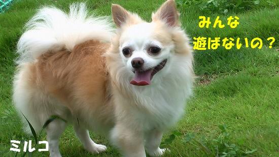 20080831IMGA0067.jpg