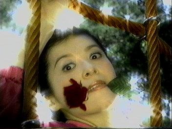 森若さん薔薇。