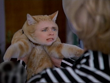 猫サブリナ。