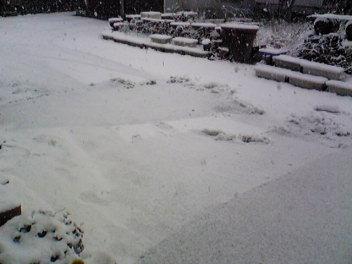 我が家の雪。